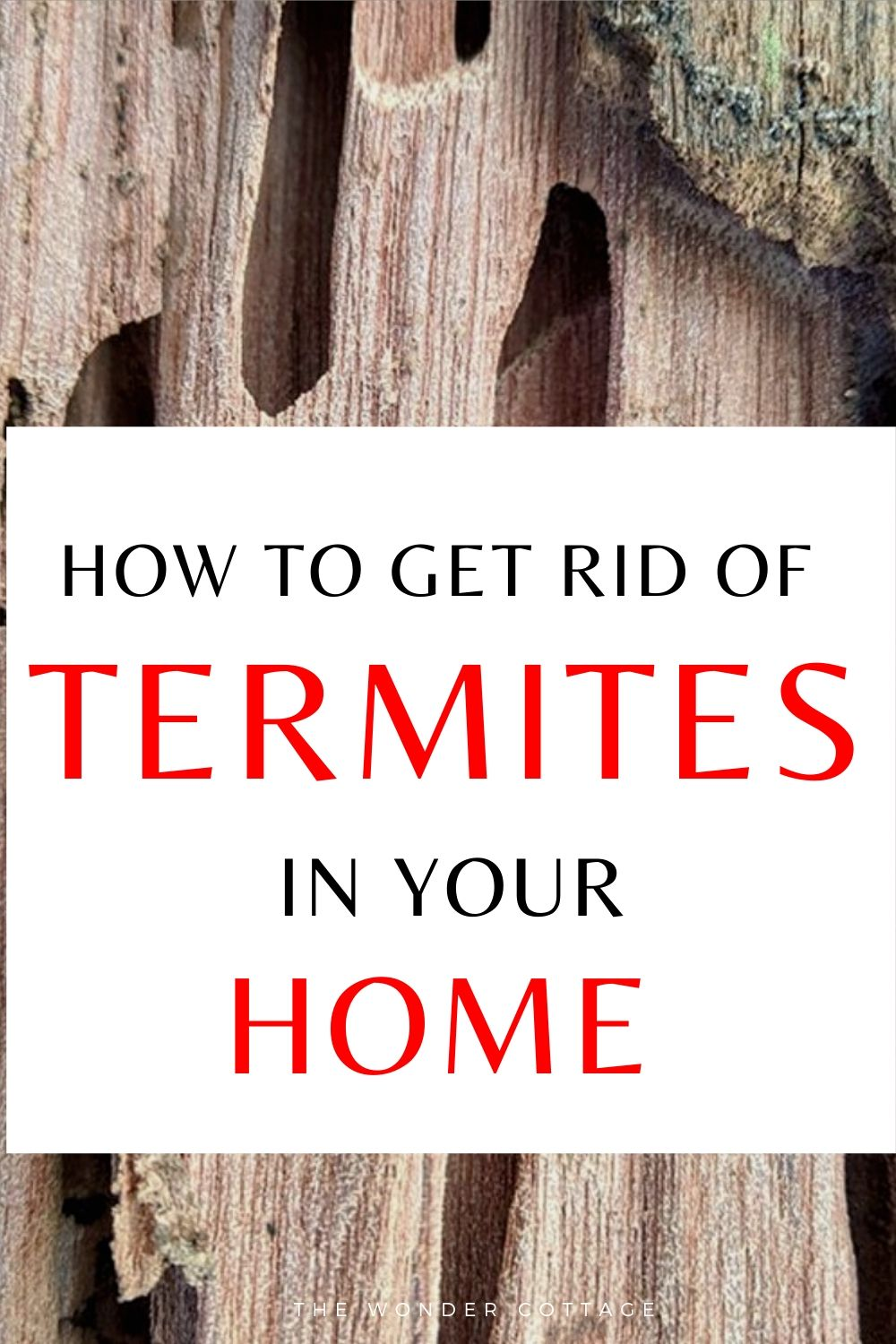 how to get rid of termites in your home