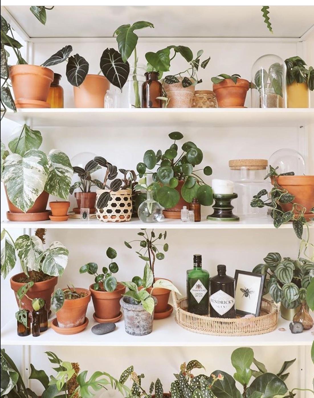 plant shelf ideas