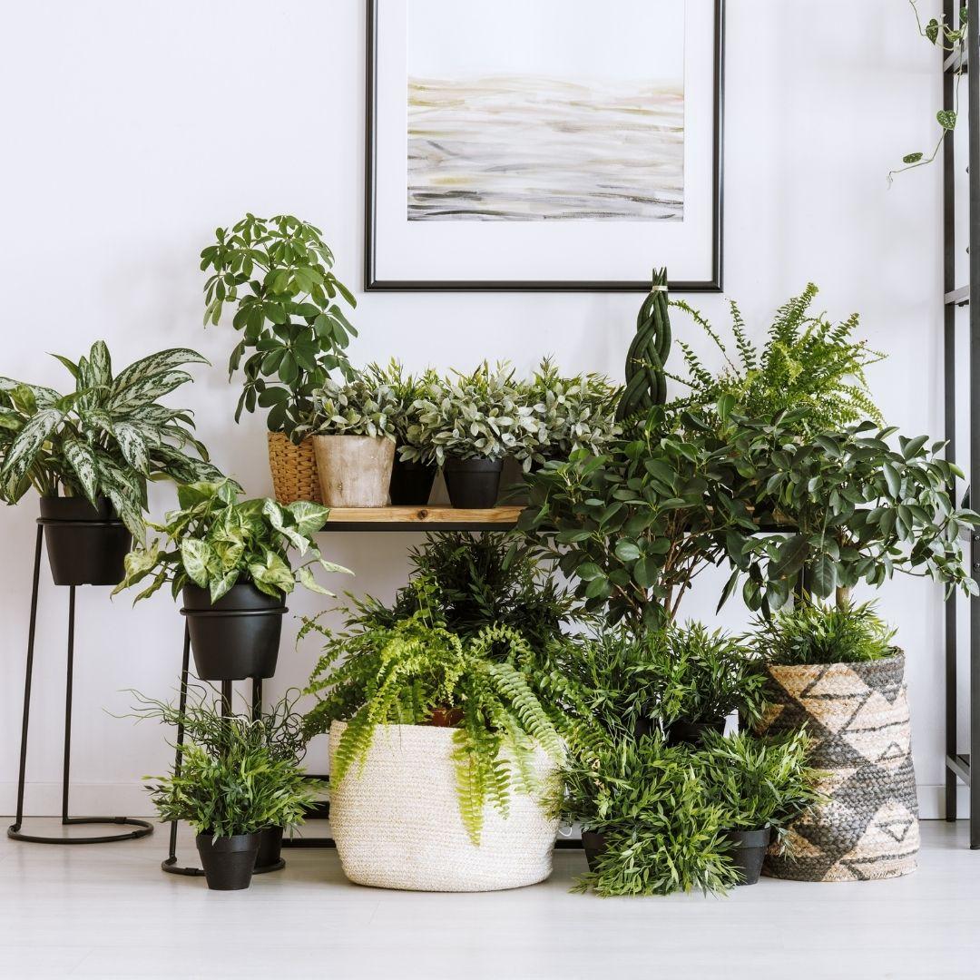 house plants and shelf