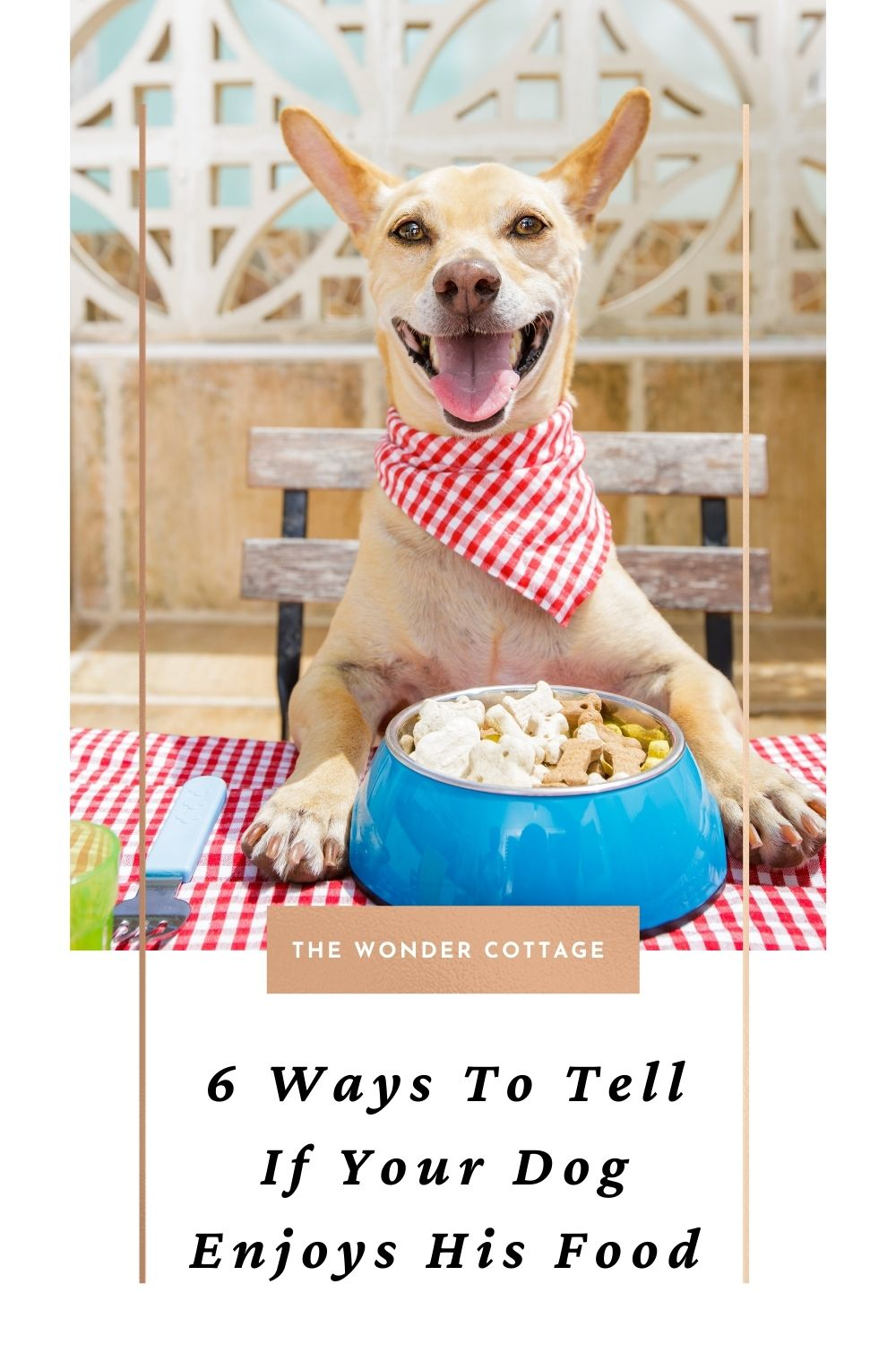 6 ways to tell if your dog enjoys his food