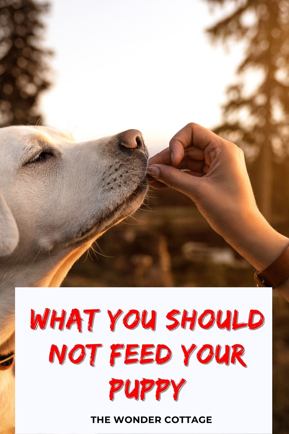 what you should not feed your puppy