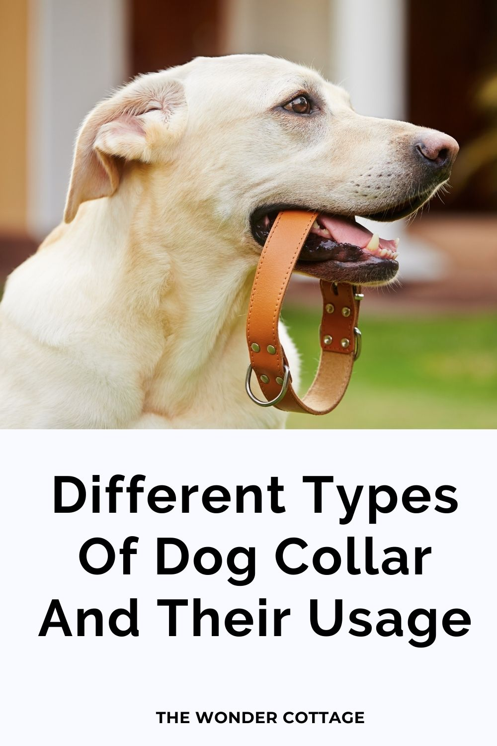 Different Types Of Dog Collar And Their Usage