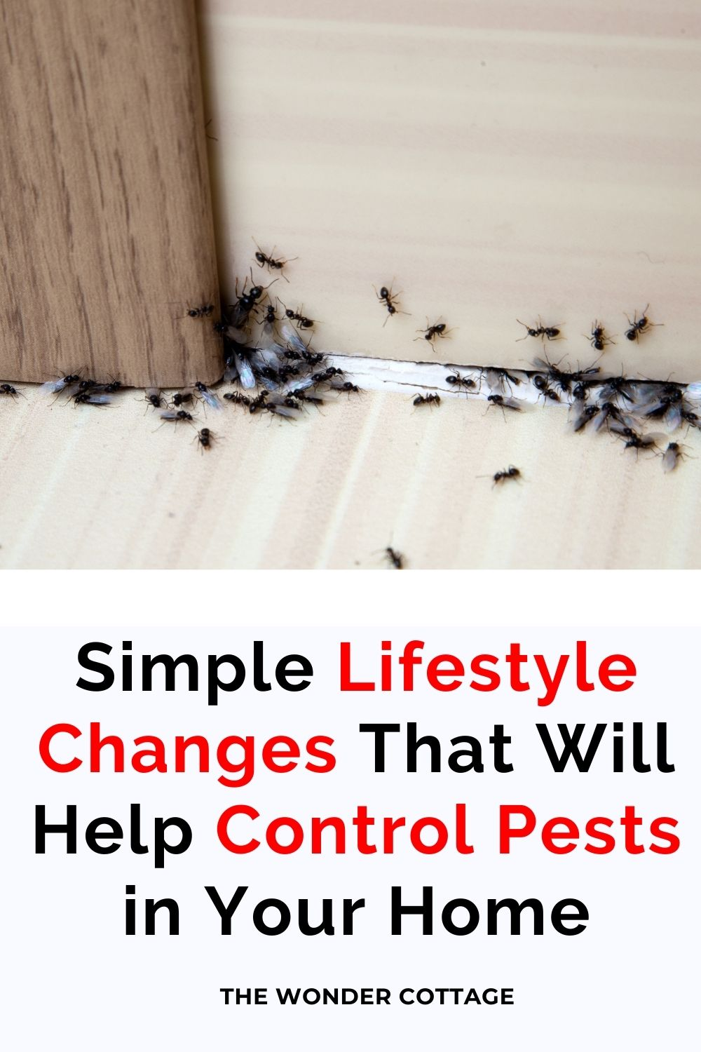 simple lifestyle changes that will help control pests in your home