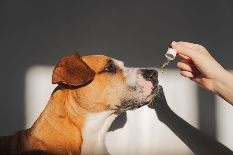 dog taking CBD oil from dropper