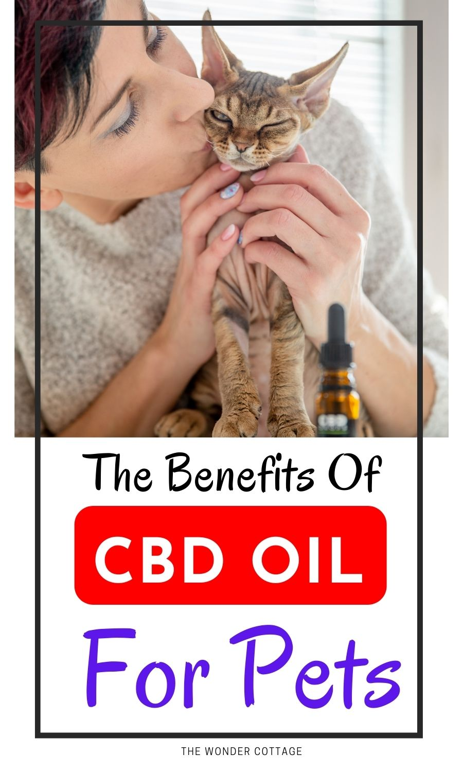 The benefits of CBD oi for pets